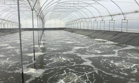 La Aireación, la clave para la intensificación del camarón y Tilapia en la acuacultura
