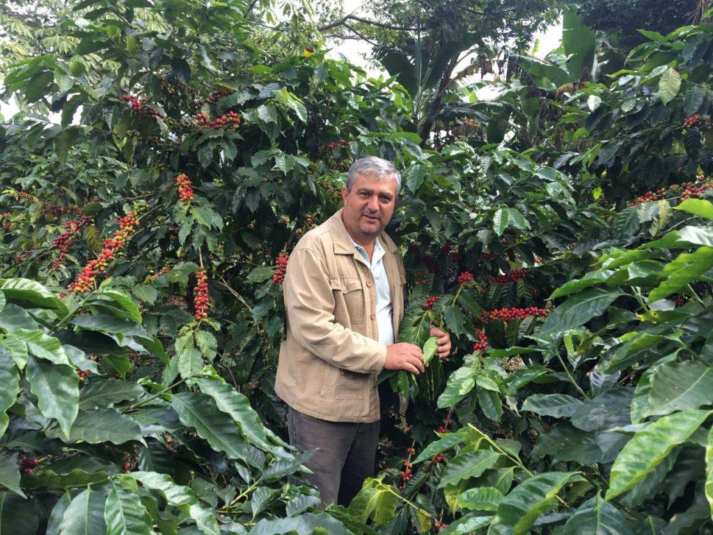 Café de Olopa, Chiquimula con notas achocolatadas, caramelo y cítricas conquistan el paladar de consumidores de Europa y Estados Unidos