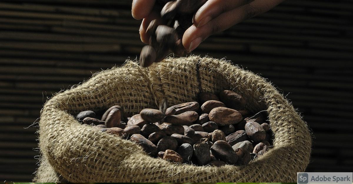 cacao en Nicaragua