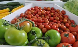 exportación de productos agropecuarios de Guatemala