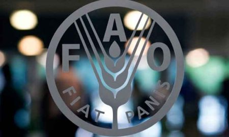 cumbre FAO