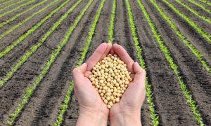 exportaciones centroaméricas agrícolas